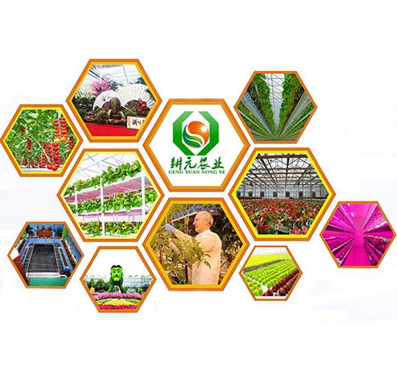 无土栽培厂家产品优·有保障·专业的服务