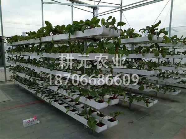 立体基质栽培
