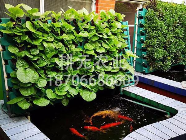 小型鱼菜共生系统