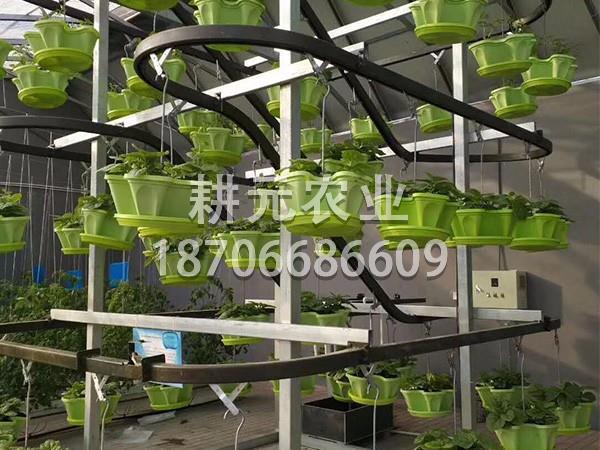 应用无土栽培设备有什么优点